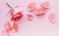 Онлайн-гадание по лепесткам розы